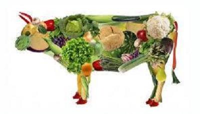 Come scegliere un buon corso di cucina vegana